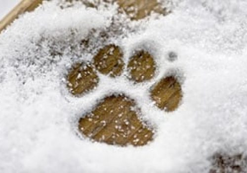 general-top-ten-winter-skin-paw-care-tips